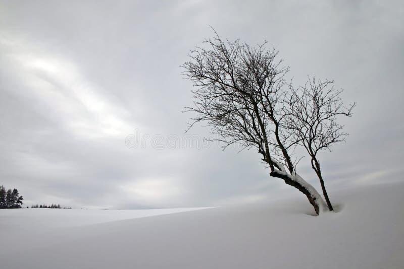 Download Solitude stock image. Image of season, solitude, blue - 1530675