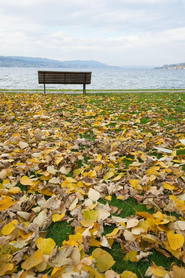 Download Solitude stock photo. Image of beautiful, golden, fall - 17033276