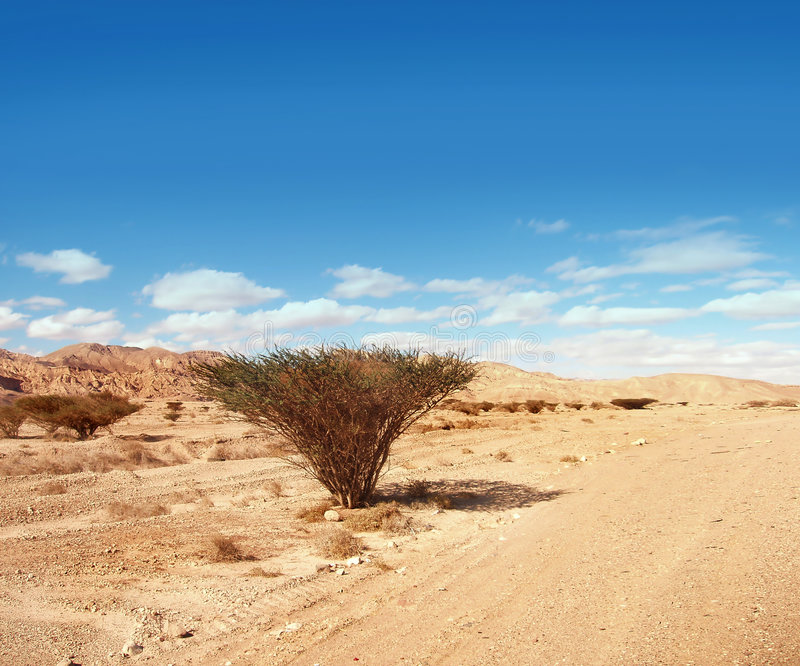 Download Solitude stock image. Image of lonely, plant, soil, drought - 430185