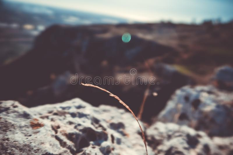Solitude on the mountain royalty free stock photography