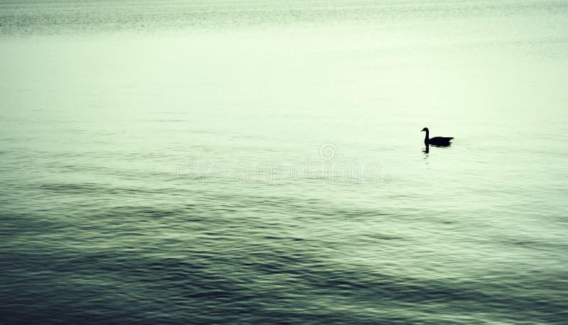 Solitude stock photos