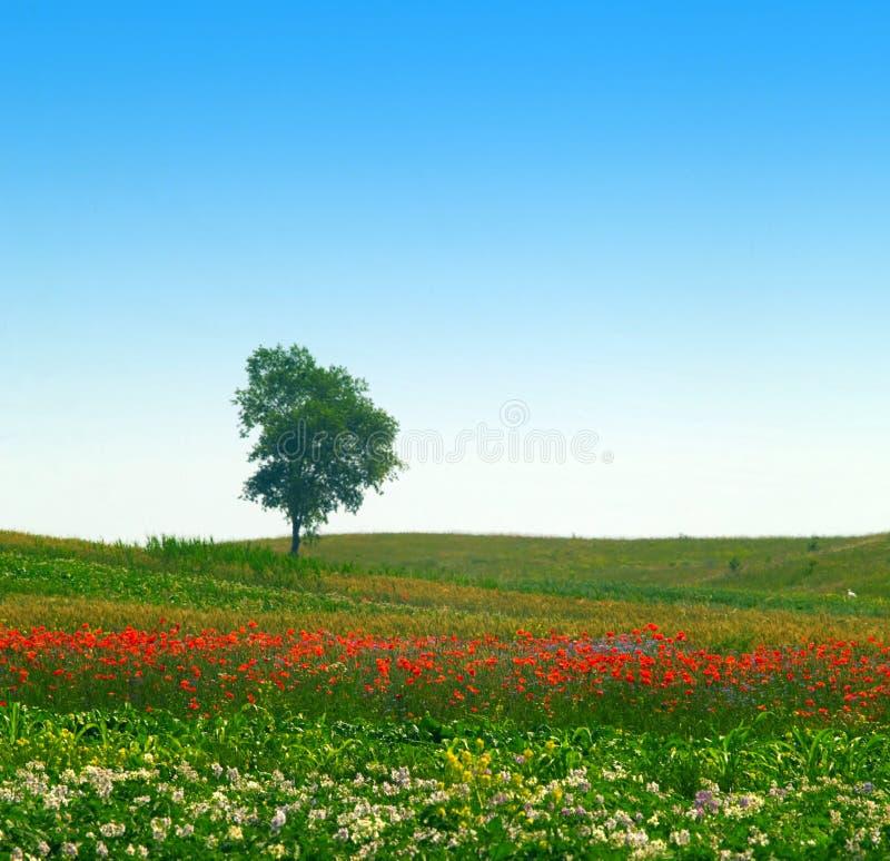 Solitude Tree Stock Photo