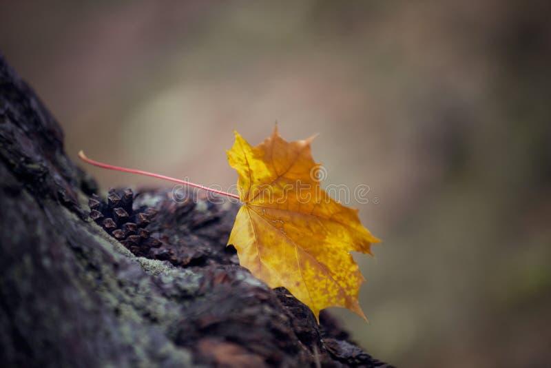 Solitudine di autunno fotografia stock libera da diritti
