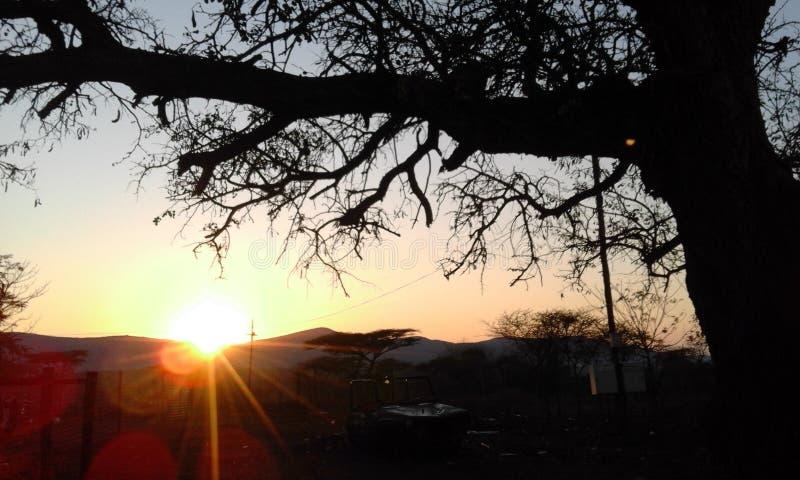 Sollöneförhöjning i Lebombo berg och härligt taggträd fotografering för bildbyråer