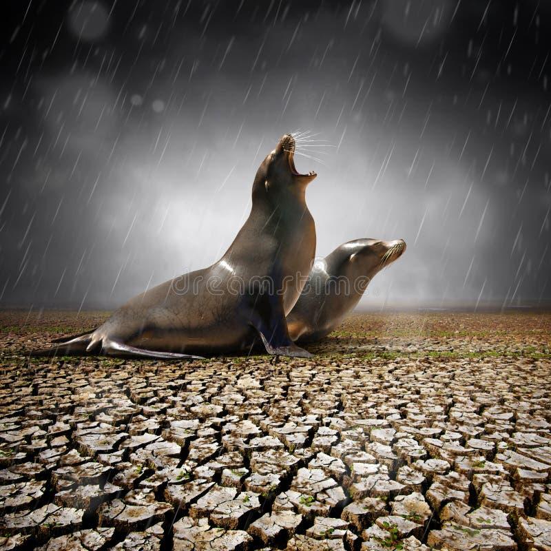 Sollievo della pioggia immagini stock libere da diritti