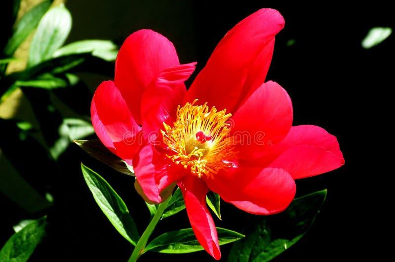 Solljus över en blomma royaltyfri fotografi