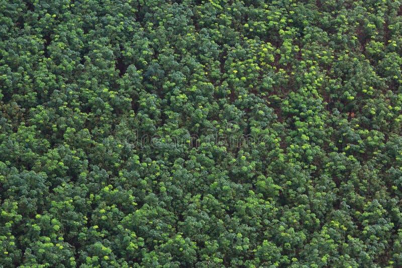 solljus för oak för skog för design för kant för ekollonhöstbakgrund arkivfoton