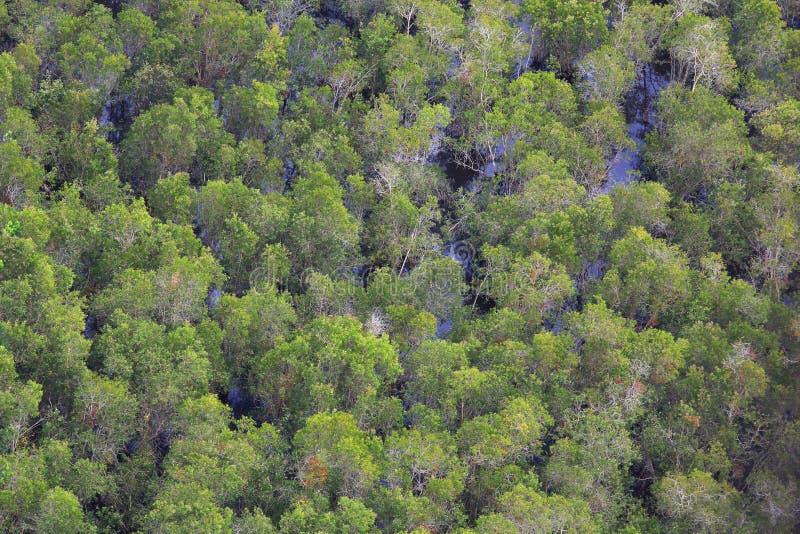 solljus för oak för skog för design för kant för ekollonhöstbakgrund arkivbild