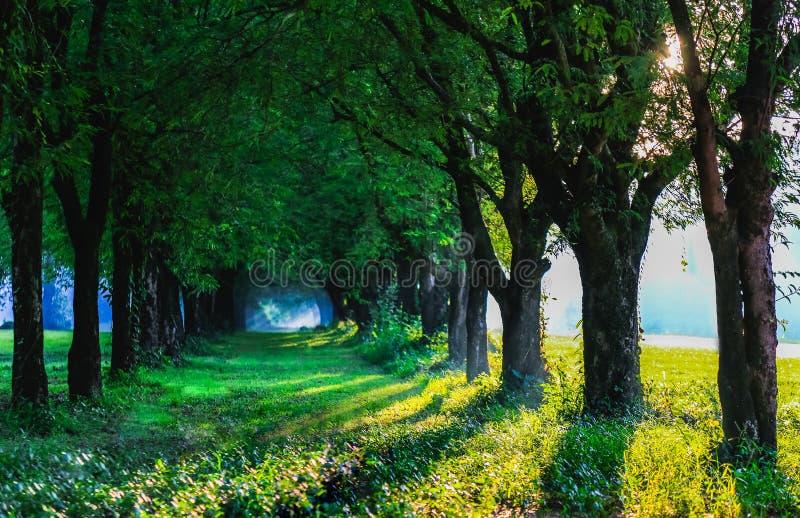 Solljus för tunnel för tamarindfruktträd magiskt av Thailand royaltyfri bild