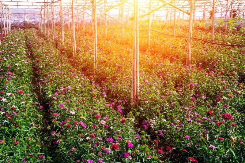solljus för vårblommadrivhus arkivbild