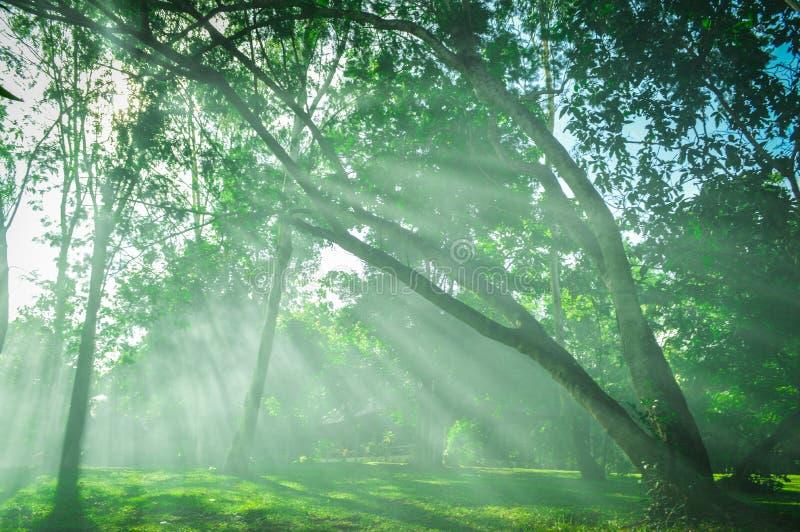 Solljus härlig solstråle i trädgård royaltyfri bild