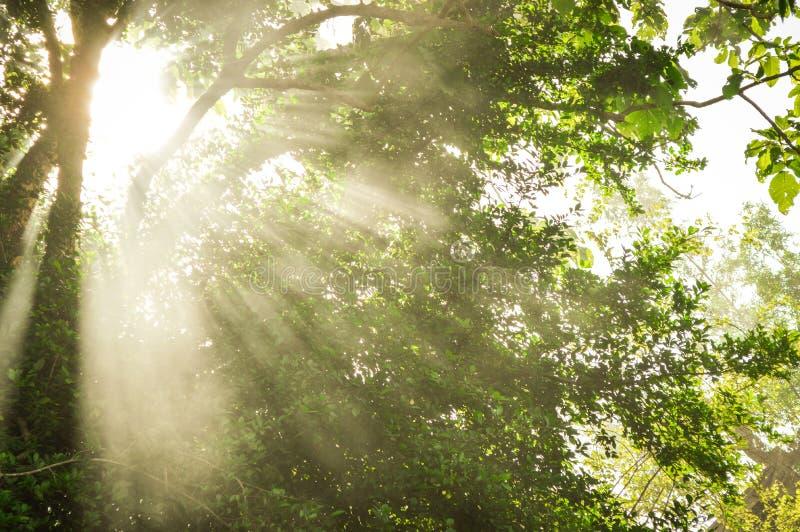 Solljus härlig solstråle i trädgård fotografering för bildbyråer