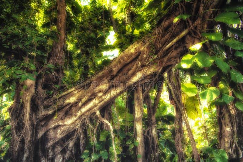 Solljus i djungelskog arkivfoto