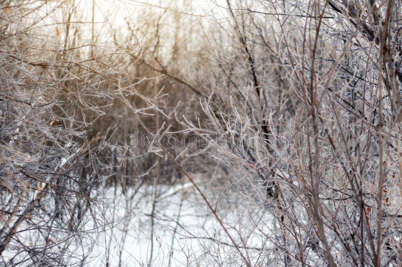 Solljus i fokus för snöig skog för vinter selektiv arkivfoto
