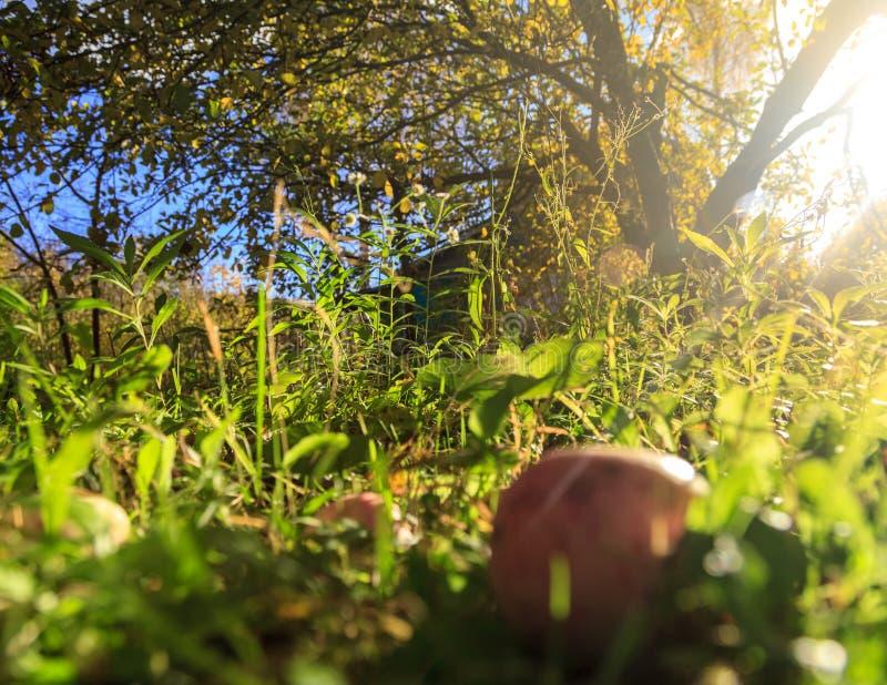 Solljus i höstträdgård arkivfoton