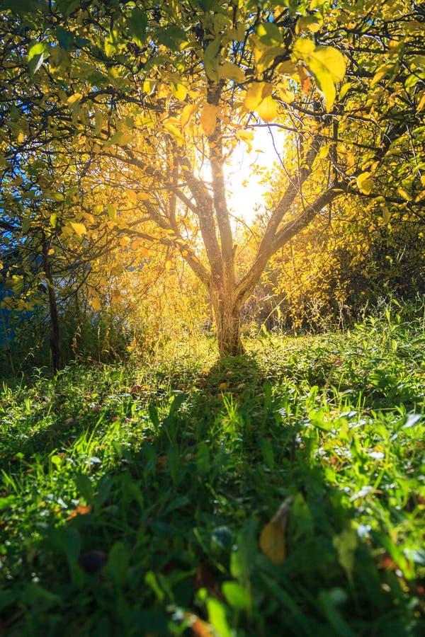 Solljus i höstträdgård royaltyfria foton