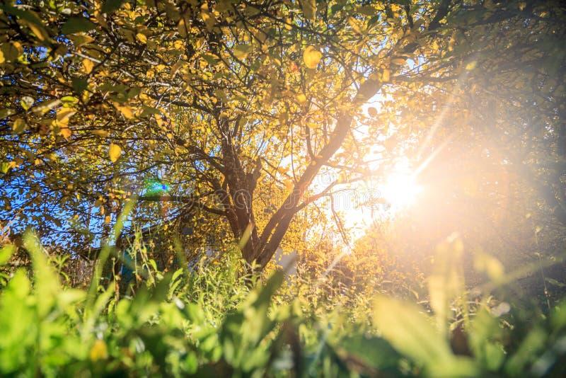 Solljus i höstträdgård fotografering för bildbyråer