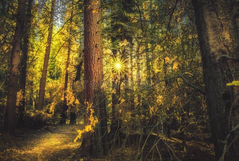 Solljus i skogen arkivfoton