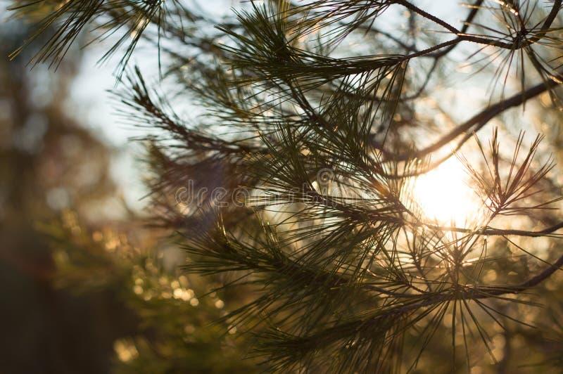 Solljus mellan blad arkivbilder
