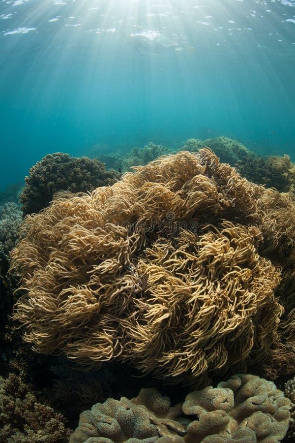Solljus och koraller fotografering för bildbyråer