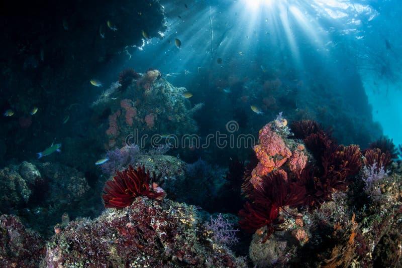 Solljus och Rocky Pacific Reef royaltyfri fotografi
