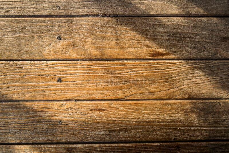 Solljus på trä arkivbilder