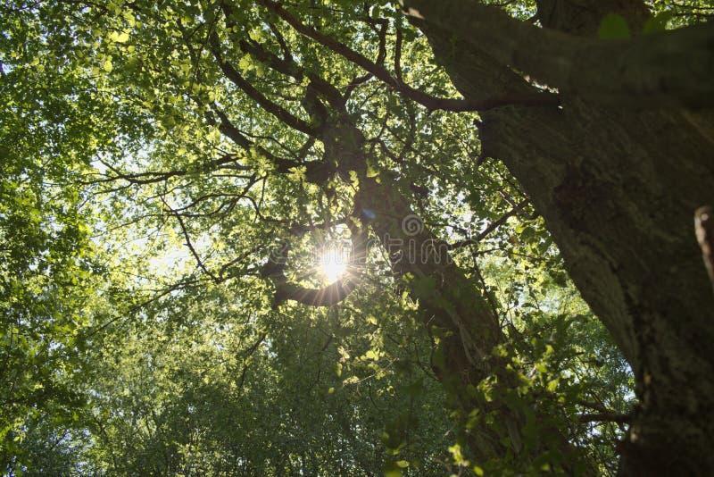 Solljus på trädöverkanten royaltyfri fotografi