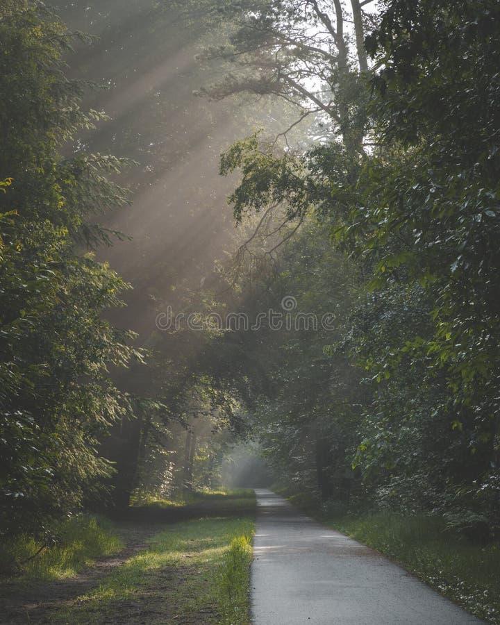 Solljus som kommer till och med träd och dimmiga dimmiga villkor på den cykla och gå banan Den Zonlicht dörren de boomtoppen en-m royaltyfri foto