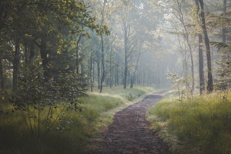 Solljus som kommer till och med träd och dimmiga dimmiga villkor på den cykla och gå banan Den Zonlicht dörren de boomtoppen en-m arkivfoton