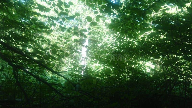 Solljus som skiner till och med sidor royaltyfria foton