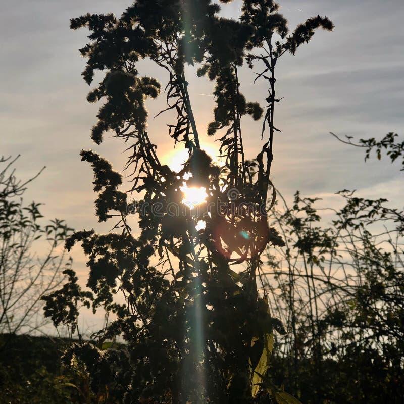 Solljus till och med blomman i aftonen royaltyfria foton