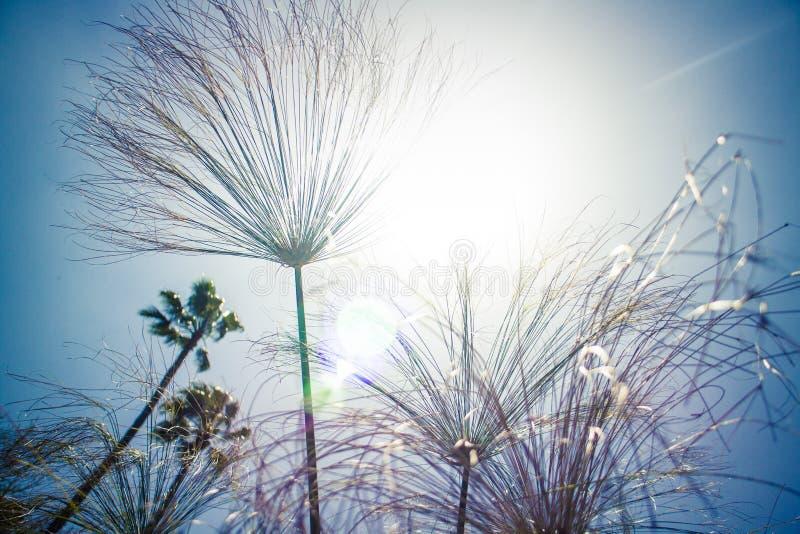 Solljus till och med högväxt gräs och vegetation i Kalifornien royaltyfri bild