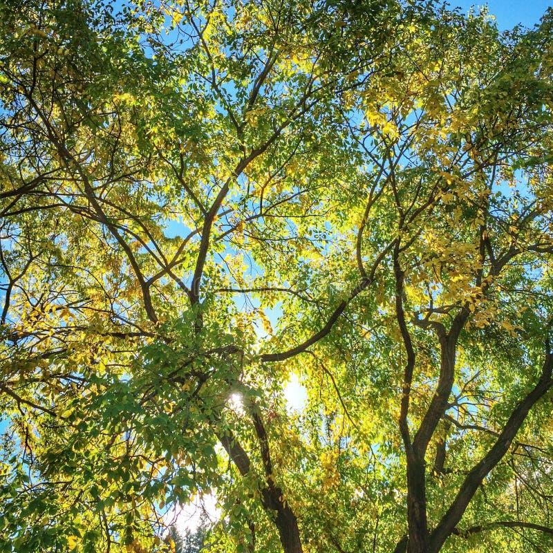 Solljus till och med trees royaltyfri bild