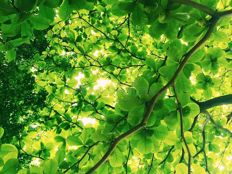 Solljus till och med treesna arkivbild