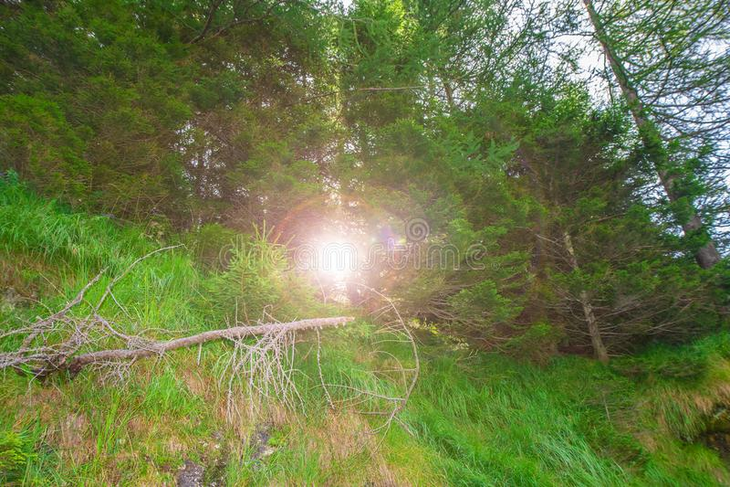 Solljusbortgång till och med träd i bergen arkivfoton