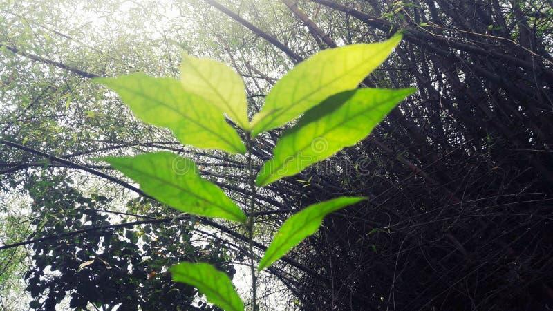 Solljusnedgångar på växten arkivfoton
