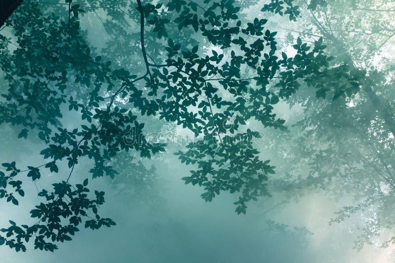 Solljusstrålar gör vägen till och med sidor av träd och mistNaen royaltyfri bild