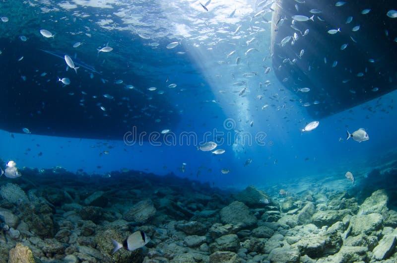 Solljusstråle och mycket undervattens- plats för fisk med blå bakgrund arkivfoton