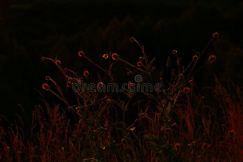 Solnedgångörter arkivfoton