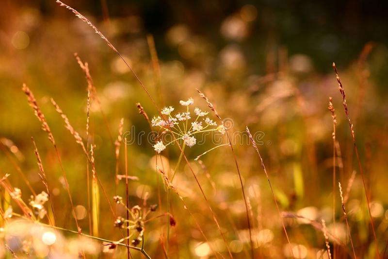 Solnedgångörter royaltyfria foton
