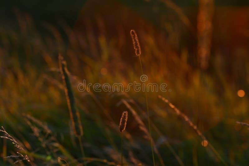 Solnedgångörter arkivfoto
