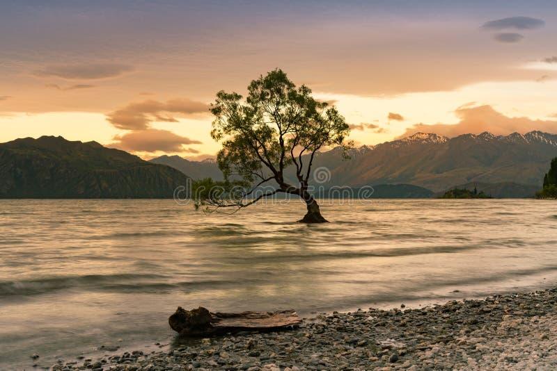 Solnedgång över bara träd i den Wanaka vattensjön arkivbild