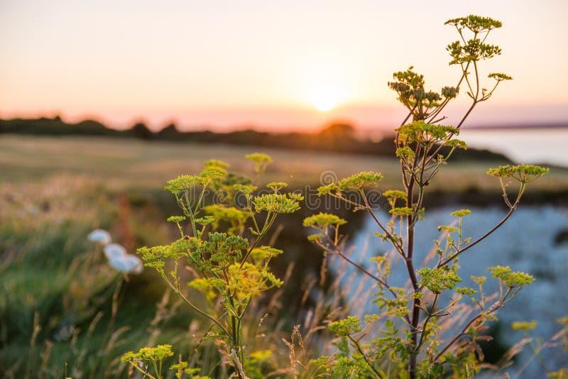 Solnedgång över Bournemouth och gamla Harry Rocks Wildlife arkivfoto