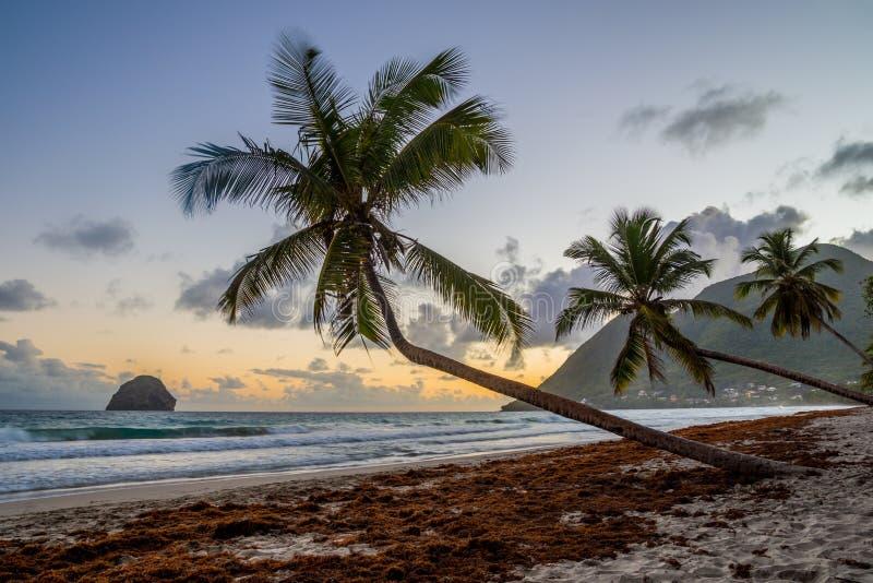 Solnedgång över den karibiska Martinique strandkokosnöten Le Diamant royaltyfri fotografi