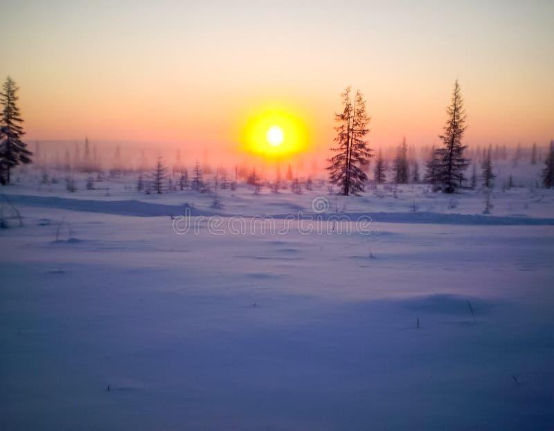 Solnedgång över dentäckte taigaen Yakut taiga i vintern arkivbilder