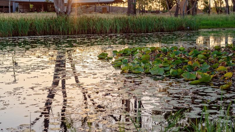Solnedgång över en lagun som fylls med liljor royaltyfri fotografi