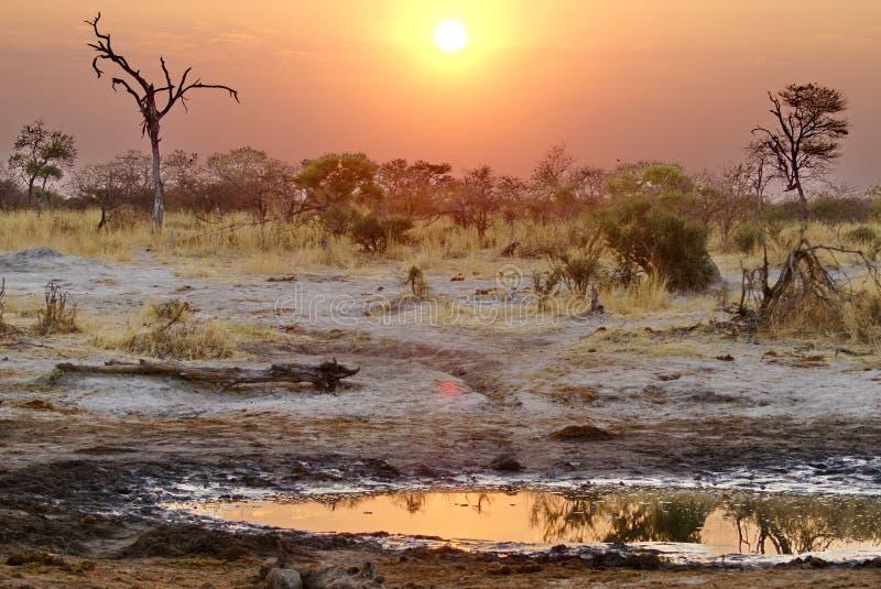 Solnedgång över ett bevattna hål royaltyfria bilder