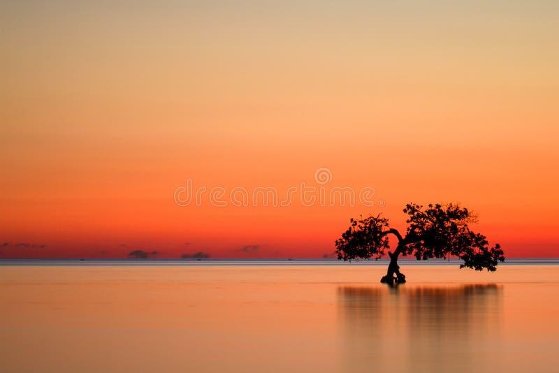 Solnedgång över ett hav med ett mangroveträd royaltyfria bilder