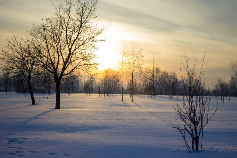 Solnedgång över fältet. arkivfoton