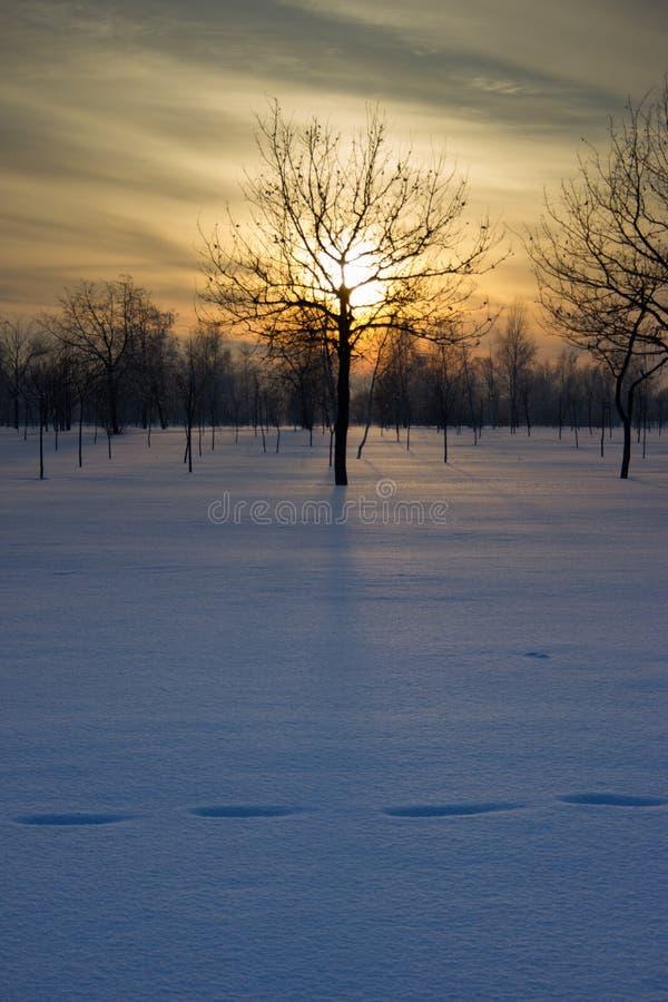Solnedgång över fältet. royaltyfri foto